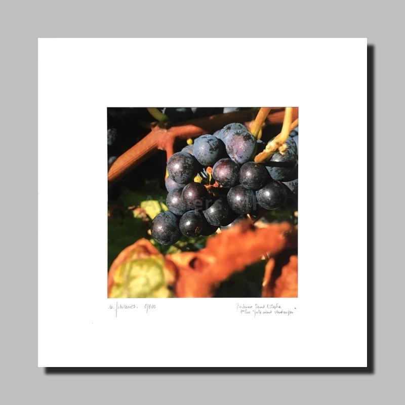 MF, photographie, vignes de Bordeaux, Saint-Estèphe, décoration murale, photographie d'art, Agessa, tirage limité