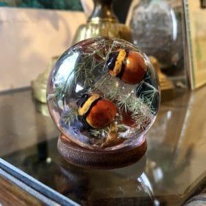 cabinet de curiosités, inclusion d'insectes, insectes, décoration vintage